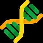DNA - Spirale